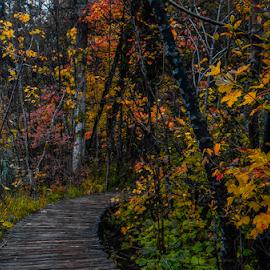 by Miro Medimorec - Landscapes Forests