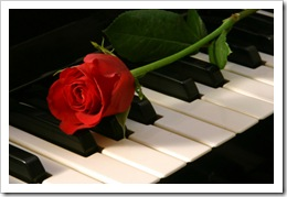 Love of Music - red rose