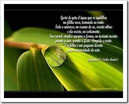 gota_cecilia