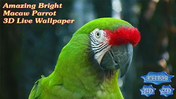 Screenshot of Amazing Bright Macaw Parrot