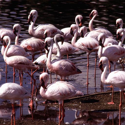 Flamingo Jigsaw Puzzle LOGO-APP點子