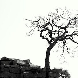 Burst out of Rocks, Withered yet Standing Tall by Kannan Manoharan - Nature Up Close Trees & Bushes ( withered tree, tree, tree on cement,  )