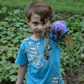Little Gardener by Shannon Maltbie-Davis - Babies & Children Children Candids