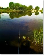 Село Прилуцьке. Клює гарно на мастику та перловку, звичайно і на червяка. Рибалка на Волині.