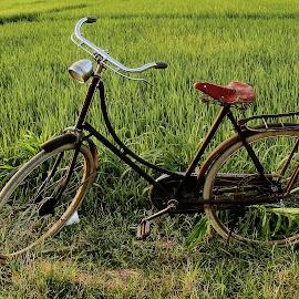 jowo wedok by Wartono Kumpulono - Transportation Bicycles