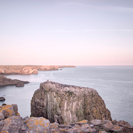 stack rocks with the guillemots by Wendy Peters - Novices Only Landscapes