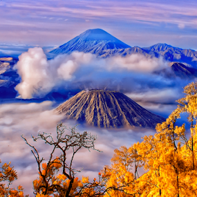 Bromo V 9.5 by Roy Ardy - Landscapes Mountains & Hills ( landscape, mountains & hills,  )