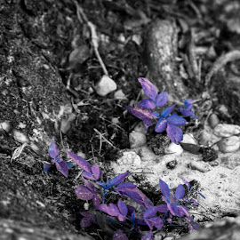 Galaxy Plant by Matthew Dyson - Nature Up Close Other plants ( sand, tree, purple, blue, black and white, plants, rocks, galaxy )