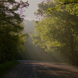 Foggy road by Zeralda La Grange - Nature Up Close Trees & Bushes ( #nature, #trees, #dirt, #road, #fog )