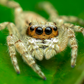Staring intimately by Dave Lerio - Animals Insects & Spiders (  )