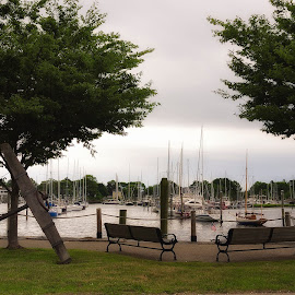 Wickford Harbor by Alan Roseman - City,  Street & Park  Historic Districts ( wickford, benches, rhode island, nice, lovely, summertime, pretty, comfortable,  )
