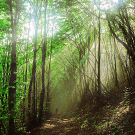 by Ivan Marjanovic - Landscapes Forests