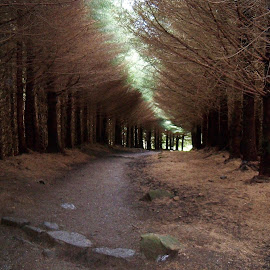 Approaching Eternity by Tina Stevens - Landscapes Forests ( scotland, europe, forest, landscape, hiking, united kingdom, two churches, nature, path, trees, inner hebrides, walk, isle of skye, hike )