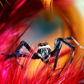 good morning spidey by Jeffrey Haryanto - Animals Insects & Spiders
