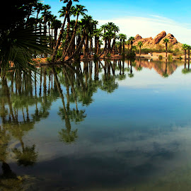 arizona parks by Leslie Hunziker - Landscapes Waterscapes ( arizona, palm trees, reflections, lake, landscape )