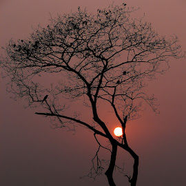 The silhouetted tree by Ahmed Keizer - Nature Up Close Other Natural Objects ( twiligh, sunset, silhouetted tree, crow, dry leaves, birds, evening, branches, sun between branches )