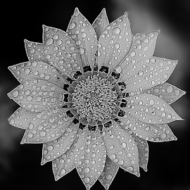 by Anshul Tiwari - Black & White Flowers & Plants
