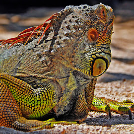 by Stefan Ho - Animals Reptiles