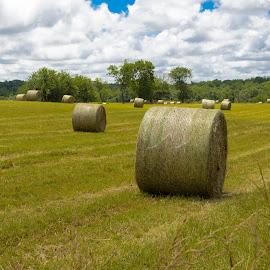 by Rany Haj - Landscapes Prairies, Meadows & Fields