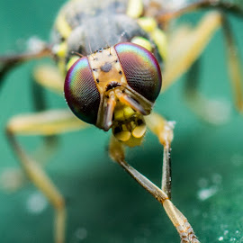 by KK-Tan Kiat - Animals Insects & Spiders (  )