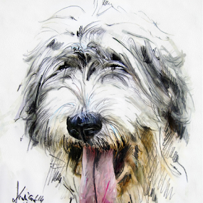 Dog portrait by Daliana Pacuraru - Drawing All Drawing ( traditional, dog, portrait, drawing, pencils,  )