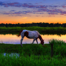 Completing The Day by Mark Ayers-Stebenne - Animals Horses ( arcadia, florida, sunset, tropical, horse, skyporn, waterway,  )