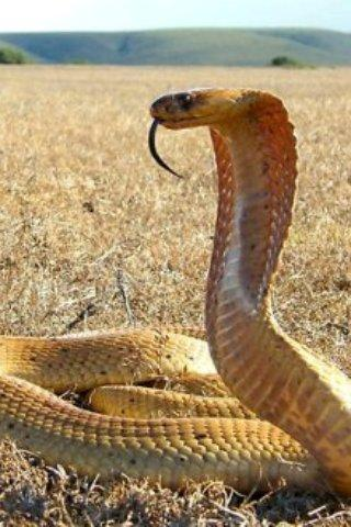 Snake Me
