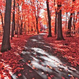 by Samer Shaur - Landscapes Forests