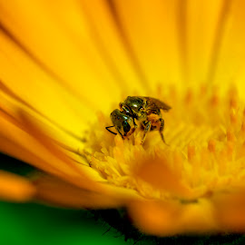 by Tushar Dudeja - Novices Only Macro