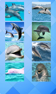 Dolphin Puzzle - screenshot