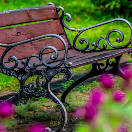 Park Bench in Bangkok. by John Greene - City,  Street & Park  City Parks ( bangkok, park, bench, carrigallen, johnn greene )