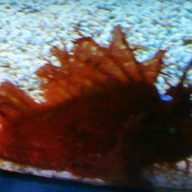 Beauty under water by Linda Blevins - Landscapes Underwater ( water, fish, aquarium )