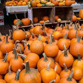 Pumpkins at a market. by Daniel Gorman - City,  Street & Park  Markets & Shops ( shop, orange, pumpkin, cites, pumpkins, street, vegetables, massachusetts, halloween, city, urban, downtown crossing, market, boston, food, vegetable )