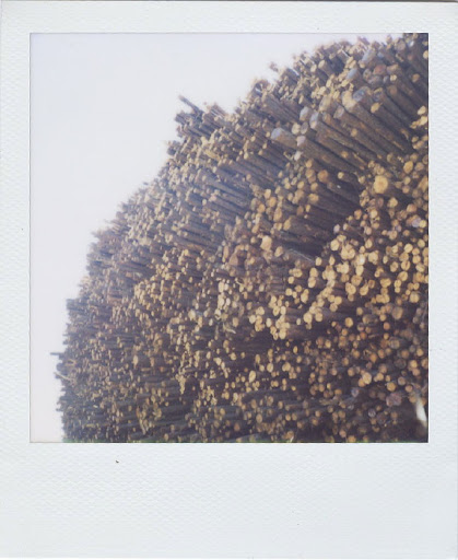 Erin Curry- stacked log polaroid 3