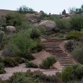 by Laura Johnston - Landscapes Deserts ( arizona )