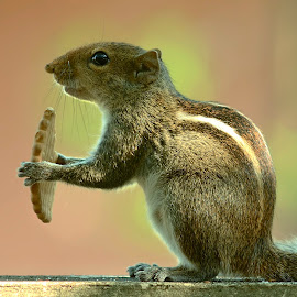 Sqirrel by Sunny Joseph - Animals Other Mammals