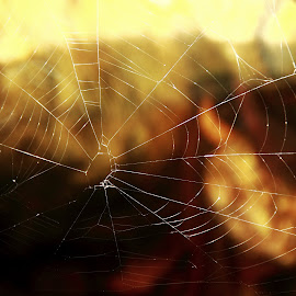 Wer s Spider  :) by Aravindh Dhatsa - Nature Up Close Webs