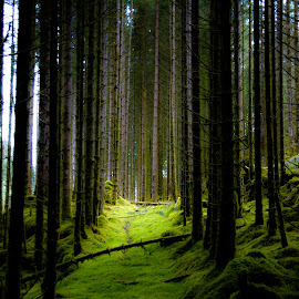by Jose Figueiredo - Landscapes Forests ( trees, forest, norway,  )