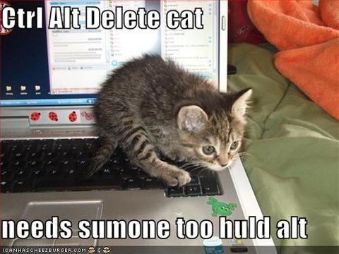 funny-pictures-ctrl-alt-del-kitten