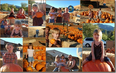 Clayton Pumpkin Patch1
