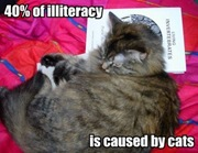40-of-illiteracy-is-caused-by-cats