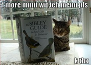 funny-pictures-cat-bird-book1