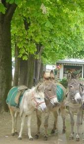 Jardin du Ranelagh-horse