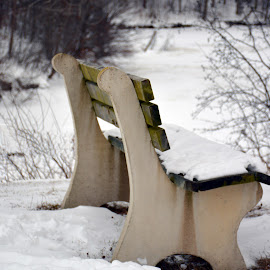 Waiting for Company by Kim BraineOtt - Artistic Objects Furniture ( winter, bench, nature, conservation area, snow, forest, lake, furniture,  )