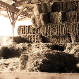 Hay How Ya Doin? by Taylor Janz - Buildings & Architecture Other Exteriors ( farm, 1900s, shed, old, sharp, hay, bales, decaying, rustic, light, shadows )
