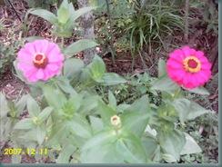 garden july 08 013