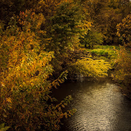 The Light in the Darkness by Shari Brase-Smith - Landscapes Prairies, Meadows & Fields ( water, stream, autumn, creek, fall, trees, colored leaves, light, color, colorful, nature )