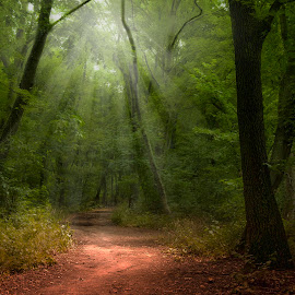 Forest by Károly Trombitás - Landscapes Forests ( nature, wood, leafs, grass, green, trees, forest, landscape, birds, sun, animal )