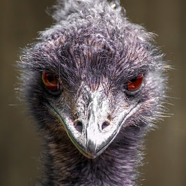 You looking at me? by Michael Stefanich Jr. - Animals Birds ( #ostrich )