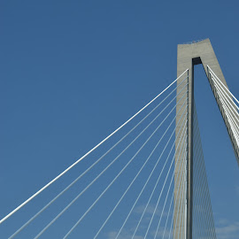 Webbed by Susan Myers - Buildings & Architecture Bridges & Suspended Structures ( charleston, ravenel bridge )